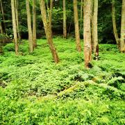 thegreensoftheforest