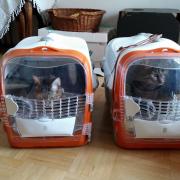 Die Astronautinnen